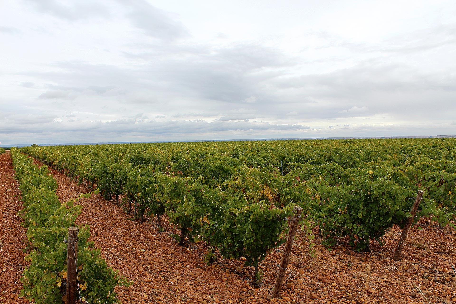 Viñas Peláez Grajal de la Ribera